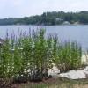 Shoreline Buffer