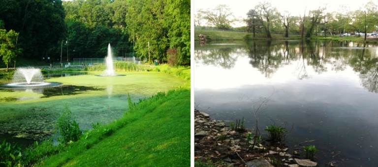 Duck Pond before-after